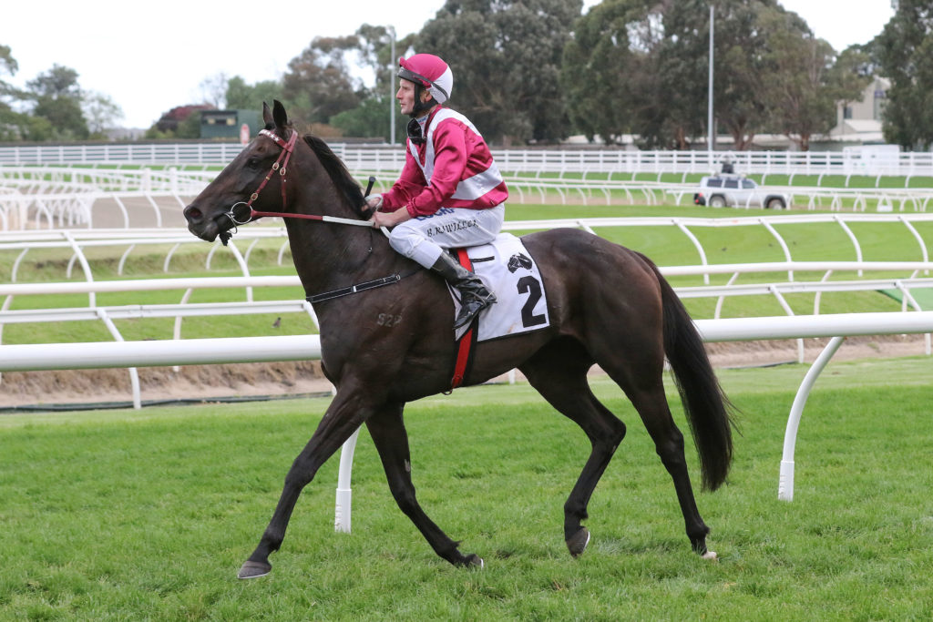 Star Exhibit Wins Second Perth Cup