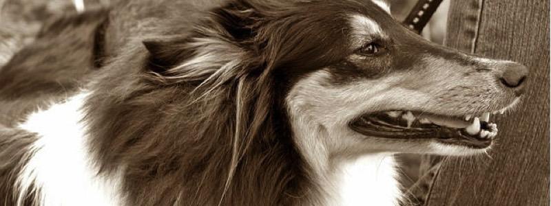dog-237001_640
