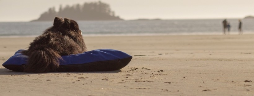 Tofino Dog Bed