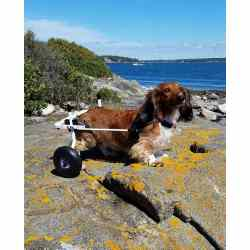 Small Crop Of Dog Wheelchair Diy