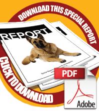 download-report