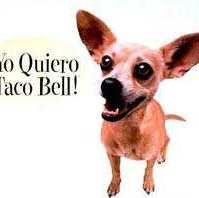 taco-bell-dog