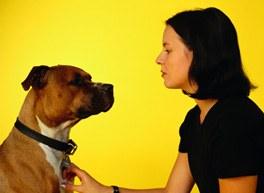Alpha Dog Myth