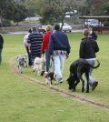 teach dog road safety