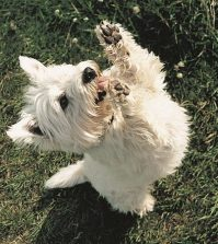 5 exercise must do dog owners