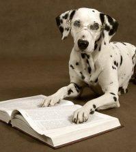 instinct vs intelligence dog