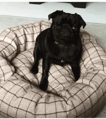 ming-ming-in-doggie-moggie-doodah-bed