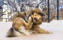 Small Of Dog Itching Benadryl