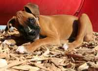 3 Best Beddings For Your Dog House: Keep Your Canine Cozy