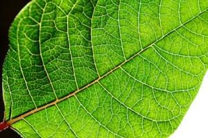 Barwa zielona oznacza świeżość, czystość