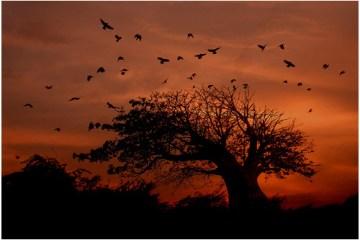 Przykład zdjęcia krajobrazowego z sylwetką drzewa i ptaków