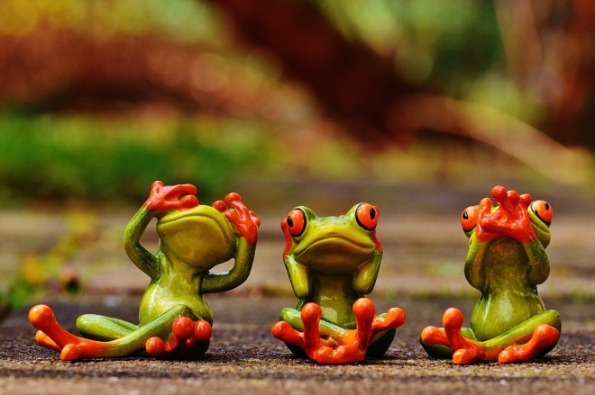 frogs-1274770_960_720