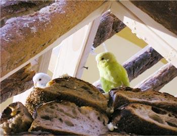 house of bread 2004.jpg4