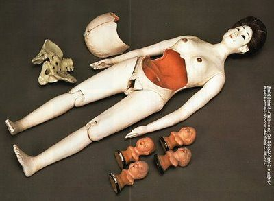 Misemono, modello anatomico