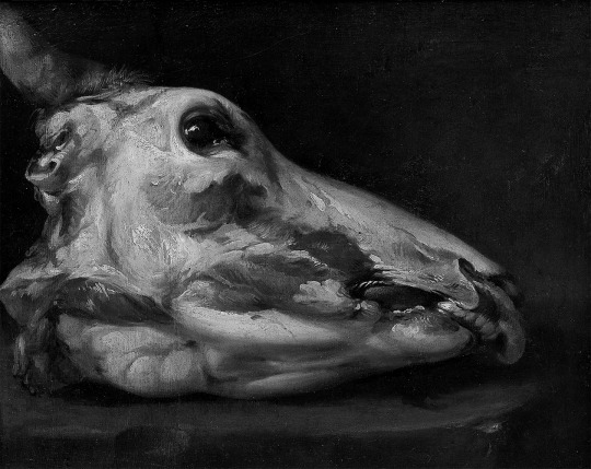 Felice Boselli - Skinned Head of a Young Bull, 1690.