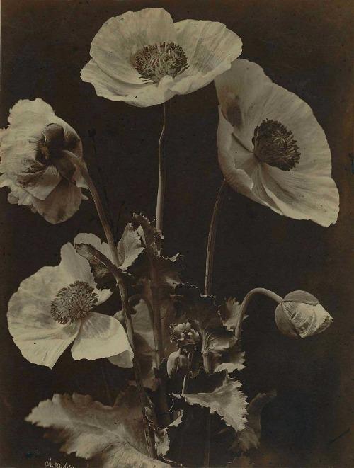 Charles Hippolyte Aubry- Poppies, 1864
