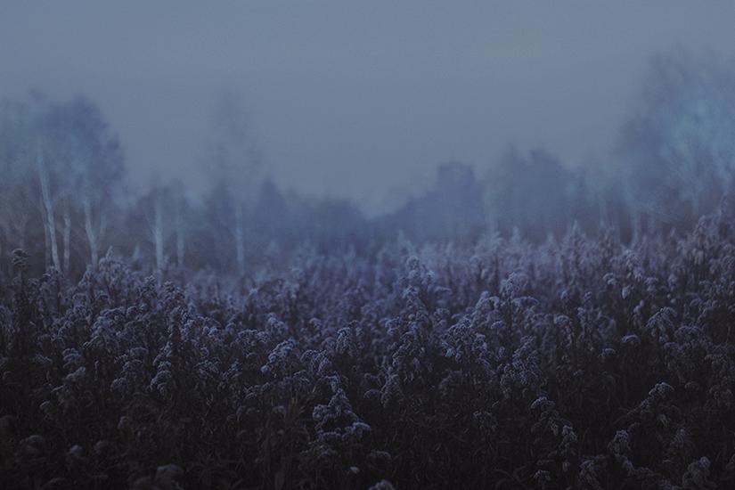 Laura Makabresku, Mgła na łąkach za domem.