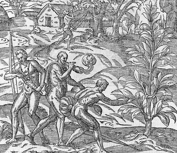 tobacco-cultivation-16th-century-science-photo-library