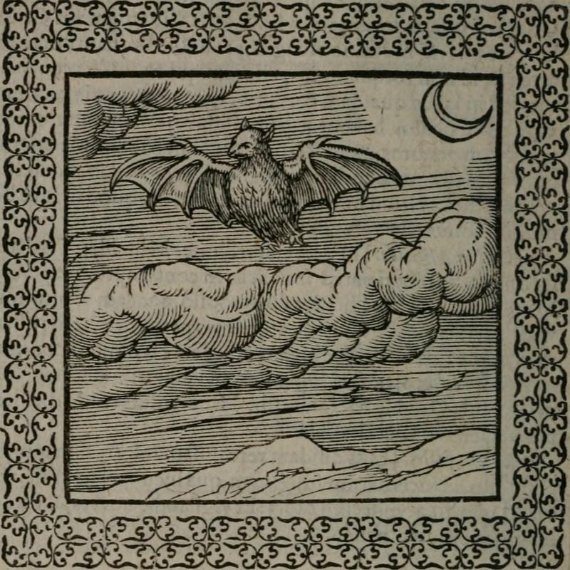 From Omnia Andreae Alciati V.C. Emblemata, 1577.