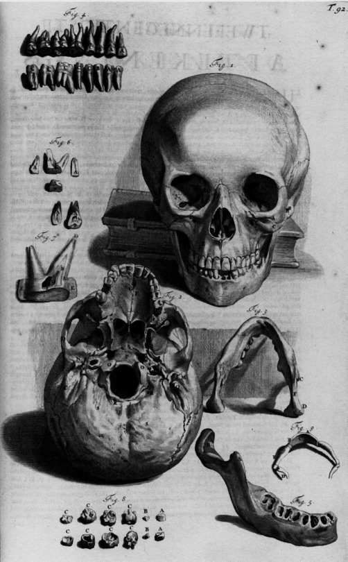 antique-anatomical-illustration-copper-engraving-showing-two-views-of-the-skull-including-jaw-detail-william-cowper-1698