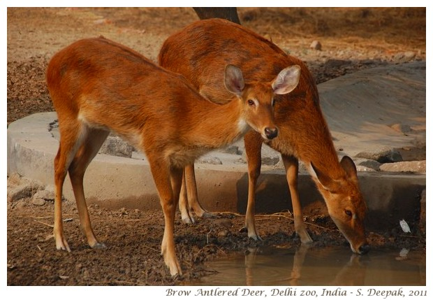High Resolution Wallpapers Of Animals Animals From The Delhi Zoo India Kalpana Image Archives