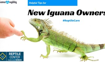 Helpful Tips for New Iguana Owners #ReptileCare