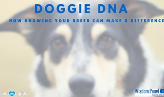Doggie DNA:  How Knowing Your Dog's Breed Can Make a Difference