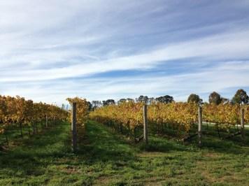 Grapevines, Vineyard, Orange Wine Tours