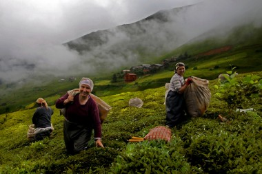 Demli ve sevdalı bir dert : çay / Ali Bülent Erdem