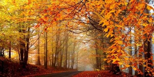 New Hampshire Fall Foliage Wallpaper I Sensi Delle Piante Karmanews