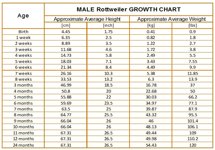 Rottweiler Growth Chart - KARMAu0027S ROTTWEILERS - height weight chart