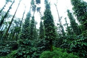 Plantation Industry