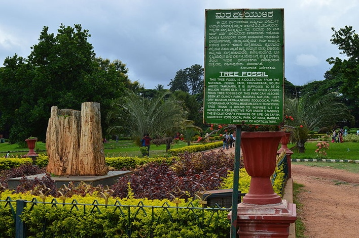 LalBagh Tree Fossil, Bangalore