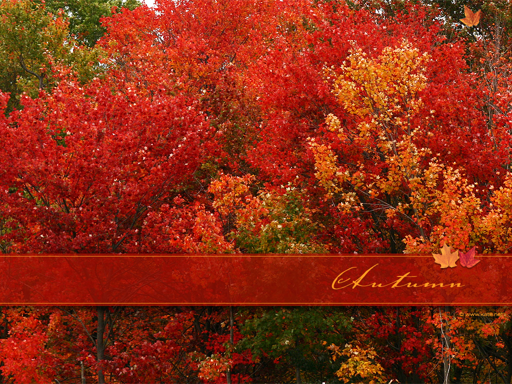 Autumn Fall Leaf Car Wallpaper Autumn Screen Saver And Wallpaper Fall Pictures