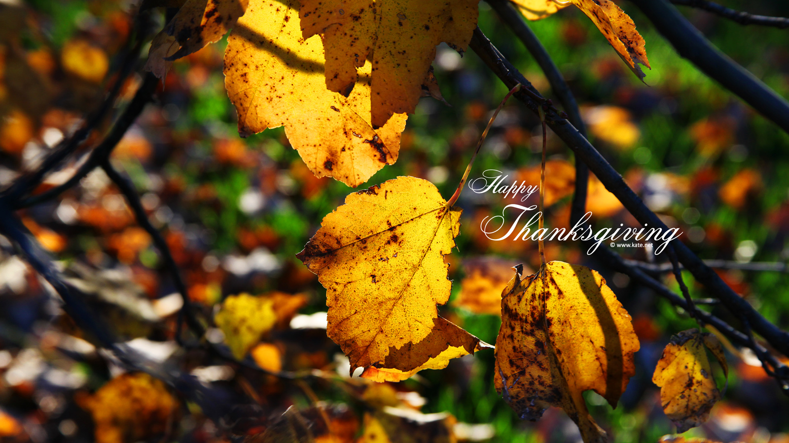 Free Computer Wallpaper Fall Leaves Thanksgiving Wallpapers By Kate Net Page 1