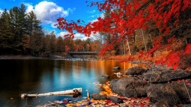 from: http://www.tntnphotos.com/2014/06/autumn-leaves-2/