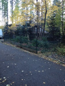 Main Garden Space
