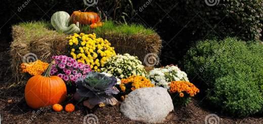 autumn-display-21293350