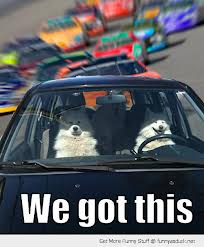 dogs driving car