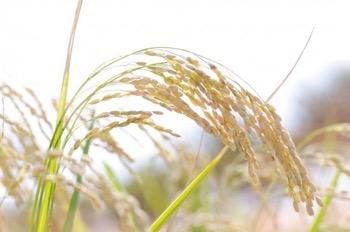 グルテンフリー生活、まずは主食から小麦を抜くことからはじめてみてはどうか