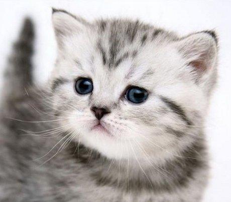 Om 3d Wallpaper Download Willen We Jonge Katjes Kattenclub