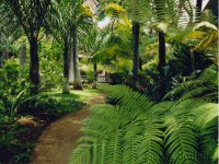 Small Tropical Gardens
