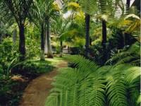Small Tropical Gardens