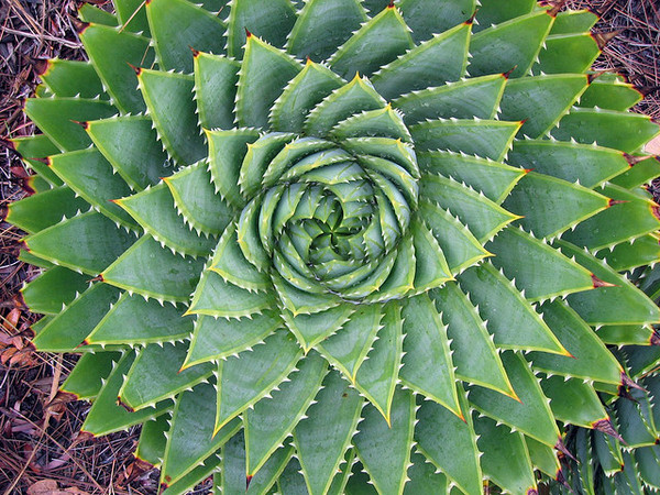 Is That a Cactus? A Guide to Identifying Cacti and Their Look-Alikes