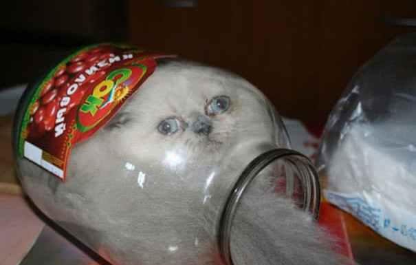 funny-cats-if-it-fits-i-sits-5