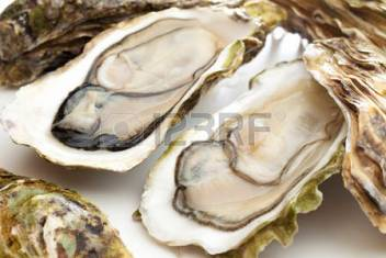 46395027-oesters
