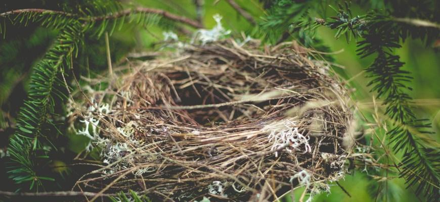 nest-918898_1920
