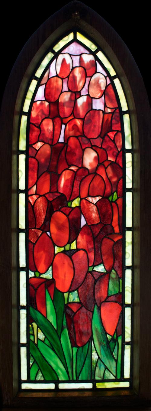 Deep-red Tulips