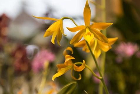 Orchideenausstellung 11-1