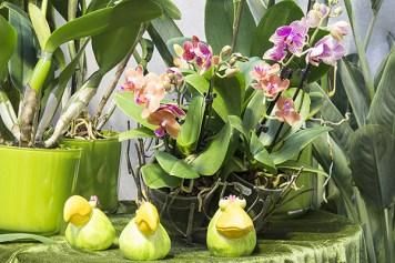 Orchideenausstellung 17-1